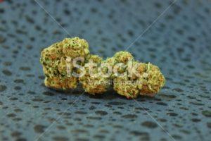 Lemon Skunk marijuana isolated with black background