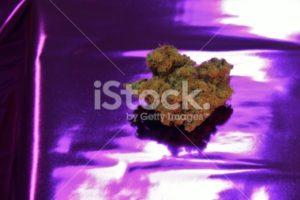 Tropicana marijuana on a purple background
