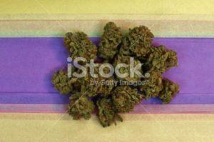 Sunny Day Marijuana Horizontal